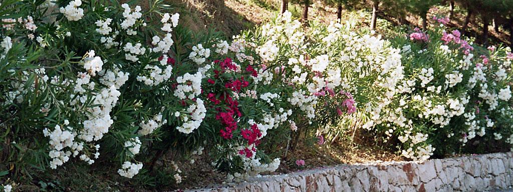 Zakynthos - Blume des Ostens; Copyright by WebTraveller